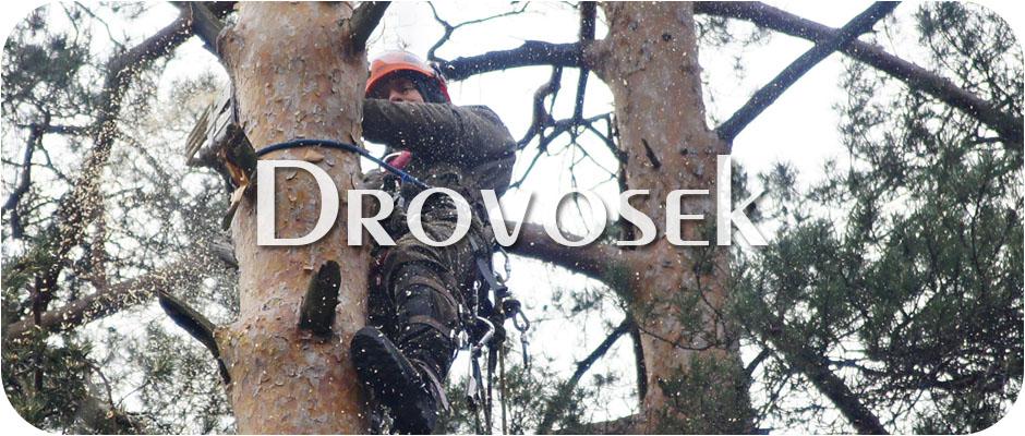 Удаление деревьев в Голицыно