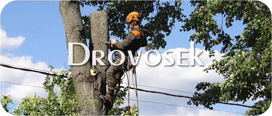 Вырубка деревьев в Дедовске