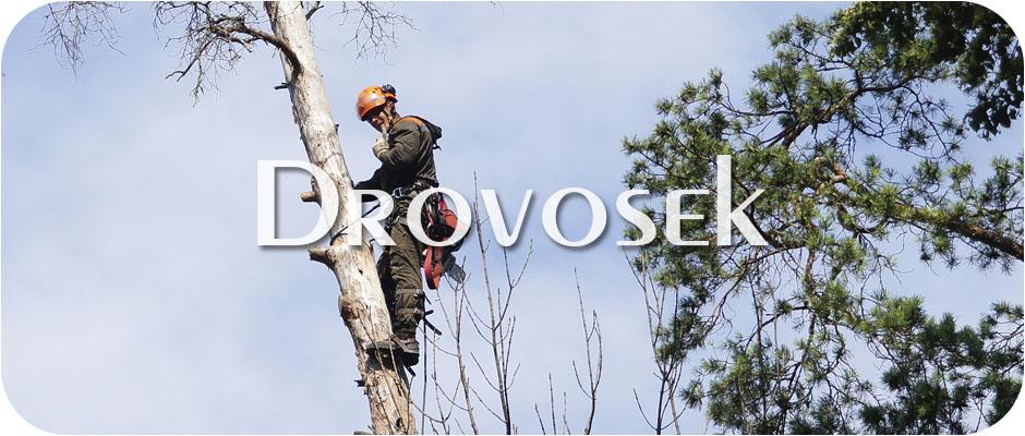 Спил деревьев в Фряново