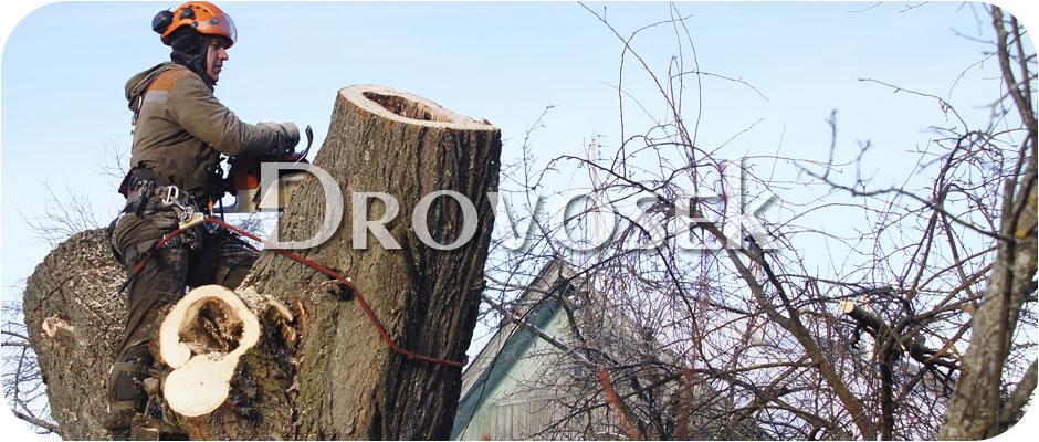 удаление деревьев Верея