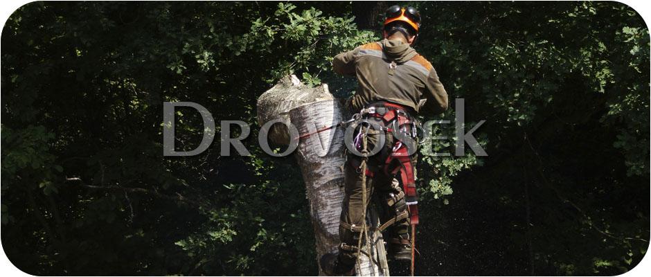 удалить дерево Селятино