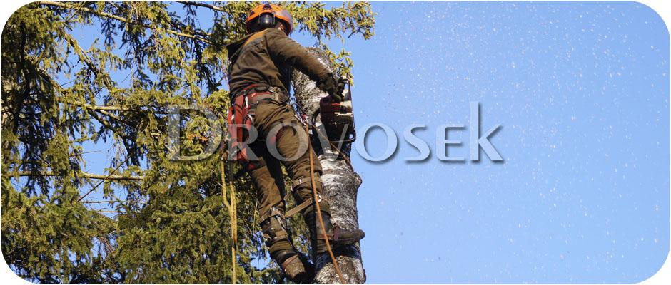 удаление деревьев Черноголовка