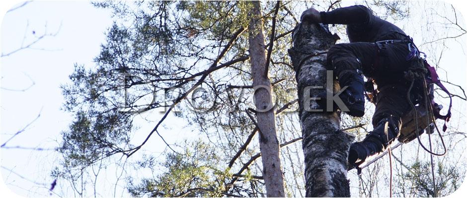 спил деревьев Черноголовка