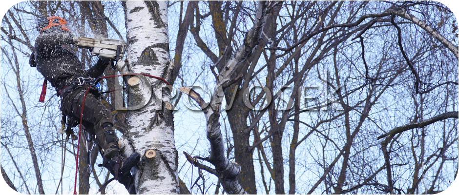вырубка деревьев Красноармейск