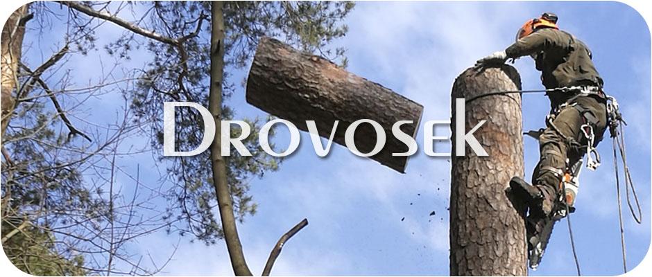 Удаление деревьев в Бронницах