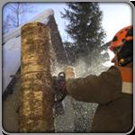 Фото удаления и обрезки деревьев