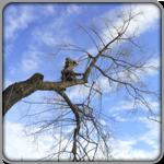 Фото кронирования и обрезки деревьев