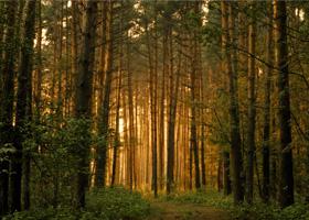 много деревьев