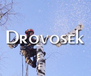 Удаление деревьев в Малаховке
