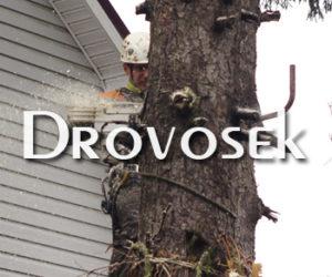 удаление дерева в Дедовске