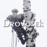 удаление дерева в Куровское