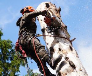 спилить деревья
