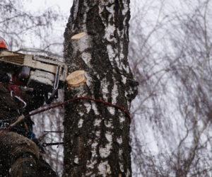 удаление деревьев