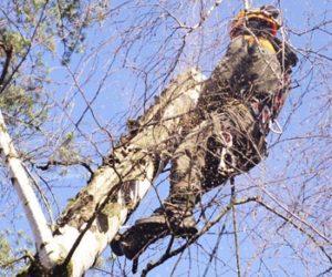 удаление деревьев Красноармейск