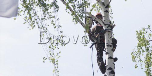кронирование деревьев в городе