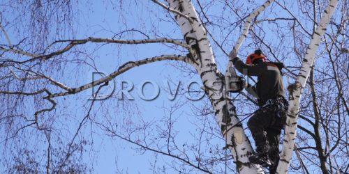 кронировать дерево