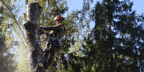 завалить дерево