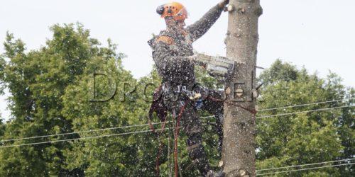вырубить дерево