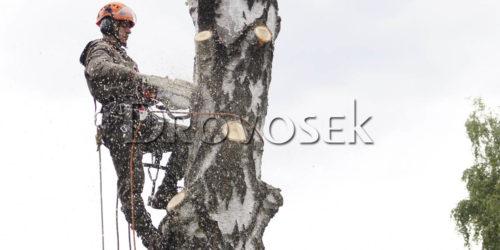 удаление деревьев арбористом
