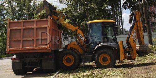 вывоз деревьев с участка
