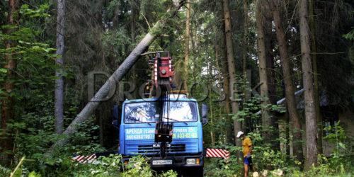 удаление деревьев автокраном