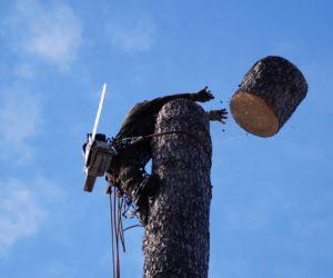 удалить дерево